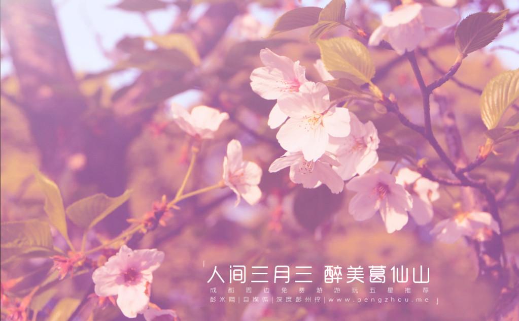 2018 | 成都彭州5大赏花线路出炉!-彭米网