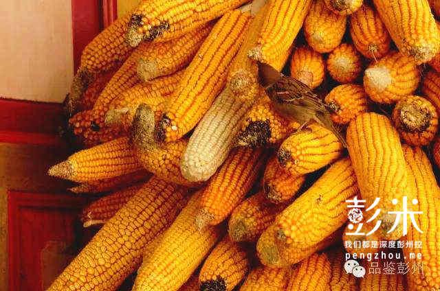 秋收,彭州秋日里最美的一抹红黄!-彭米网