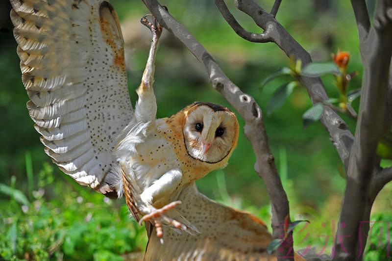 国家二级保护动物猴面? 被彭州村民捡到后放归自然-彭米网